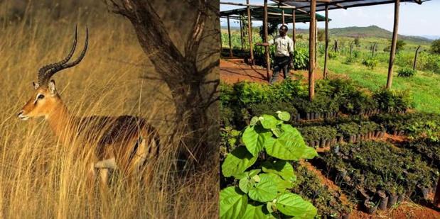 Safari ecofriendly en Tanzanie en 6 jours et 7 nuits - DR