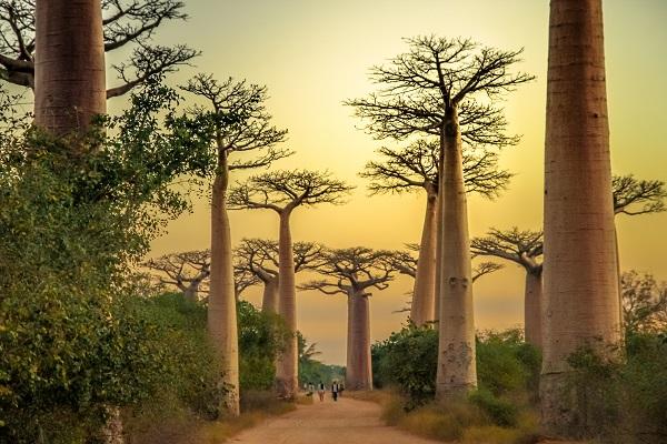 """Madagascar : La Balaguère propose un circuit """"hors des sentiers battus"""" - Crédit photo : La Balaguère"""