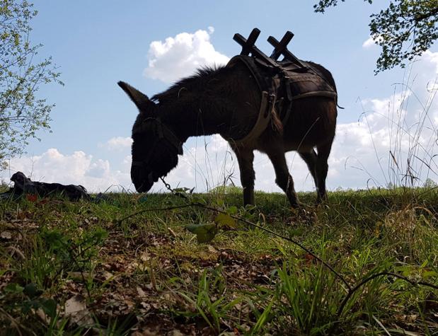 L'offre propose aussi des randonnées animations 100 % nature, les mercredis de l'âne, les balades contées, des journées medit'ânes, un aperçu de la fauconnerie - DR