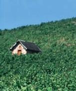 Val de Loire : Forum Tourisme Viti-vinicole le 23 juin