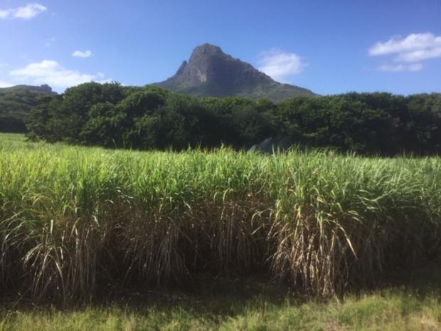 Maurice comprend un plateau central à près de 600 mètres d'altitude qui, comme l'Auvergne, est parsemé de cratères volcaniques éteints - DR : J.-P.C.