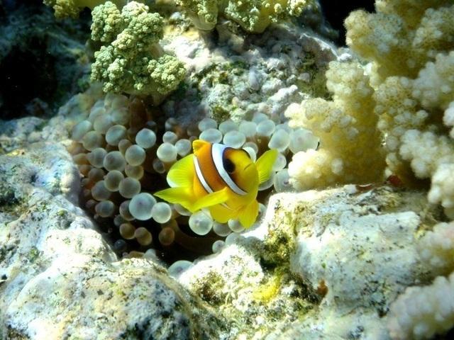 La plongée sous-marine est un produit qui effraye souvent les vendeurs, mais qui n'est pas si difficile à proposer - Photo-libre.fr
