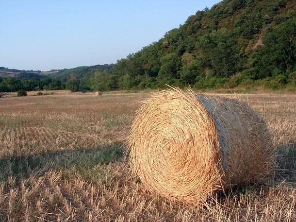 Grâce au dernier sondage du ministère de l'agriculture datant de 2010, on sait que sur 514 742 exploitations agricoles en France, 9 738 exercent une activité d'hébergement et 2 575 proposent des offres de restauration./photo JDL