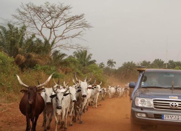 Il y a des demandes spécifiques de la part de certains groupes, comme ici la traversée d'une dizaine de pays d'Afrique de l'Ouest sur 6 semaines- DR : Voyageur Tout Terrain