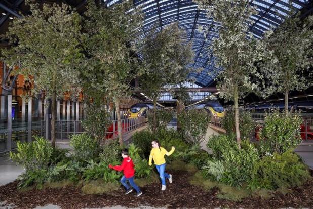 Emission carbone : Eurostar va planter un arbre pour chaque train en service