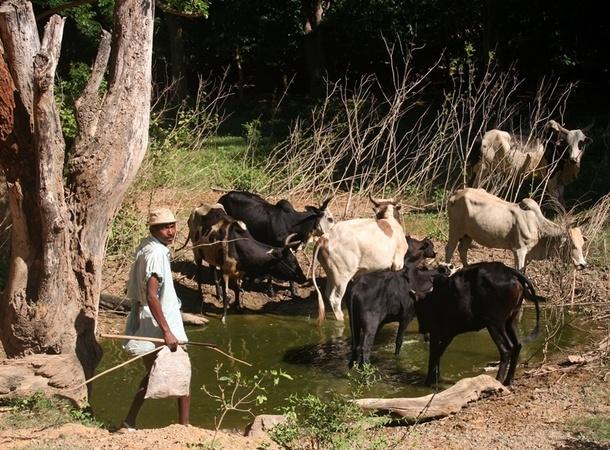 Au lieu de s'en remettre à des exploitants touristiques classiques pour développer ces atouts, les initiateurs de ce projet ont conçu « un accueil villageois ».  Ces accueils sont organisés dans chaque village par des équipes composées d'agriculteurs, d'artisans,  tous habitant obligatoirement ces villages./photo JDL