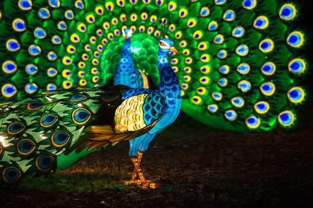 Le Festival « Lumières Sauvages » attire principalement les visiteurs du mois de novembre - DR : Parc de Thoiry