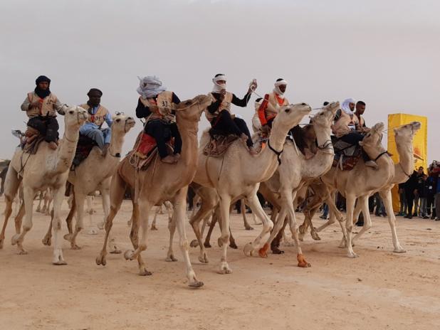 Top départ pour l'une des courses de chameaux. Ils ne se feront aucun cadeau - DR : M.S.