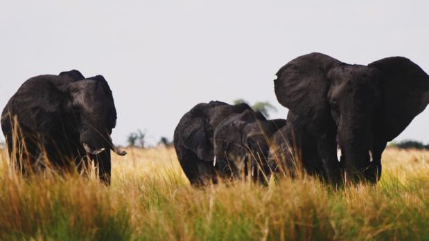 Le parc Chobe, royaume des éléphants © Laurie Medina