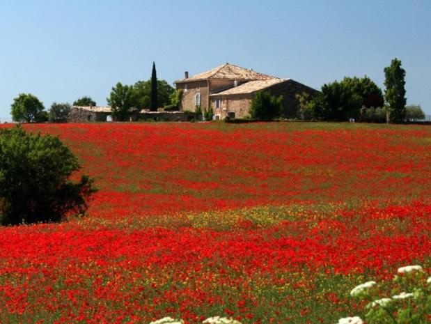 Le Couchant à Valensole propose des séjours bien-être avec une aromathérapeute - naturopathe - crédit photo : Gîtes de France
