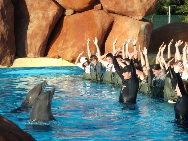 Telligo offre la possibilité aux jeunes de caresser et nager avec les dauphins - Photo DR