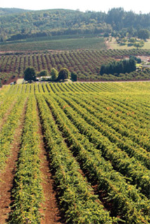 Willamette Valley, Oregon ; Crédit photo : Brand USA
