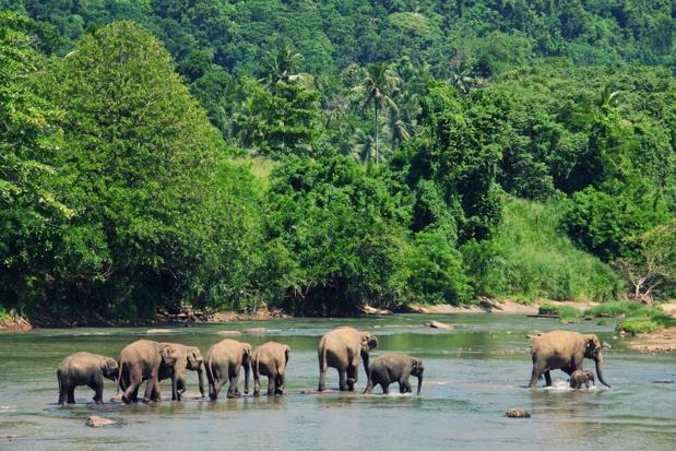Mené en partenariat avec l'organisation Youth Career Initiative, ce projet d'une durée de trois ans associe formation théorique et expérience pratique pour aider des jeunes sri-lankais âgés de 17 à 24 ans à intégrer le secteur du tourisme. - DR Depositphotos.com