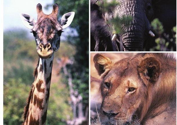 La Tanzanie est l'un des plus beaux pays d'Afrique pour aller à la rencontre des Big Five. DR
