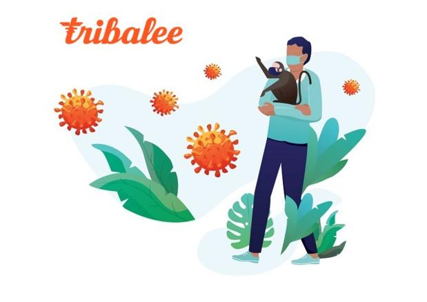 Tribalee a revu sa formule pour permettre aux salariés confinés de participer aux animations - Crédit photo : Tribalee