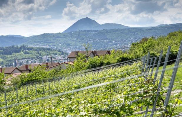 Le vignoble côtes d'Auvergne est le seul en France à être situé sur un sol volcanique. Pierre Soissons / Fédération Viticole du Puy-de-Dôme (D.R.)