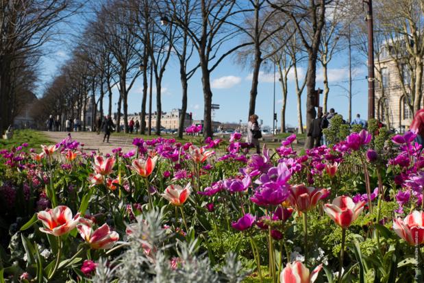 Allées de la ville de Versailles-DR office de tourisme de Versailles