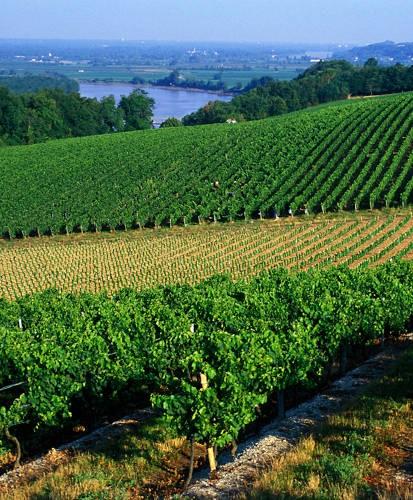 Vignobles de Bordeaux. Ici, Premières Côte de Bordeaux. Brochard CRTNA;