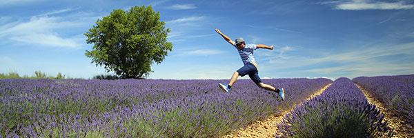 DR Dan Curko/ Champs de lavandes en Provence intérieure