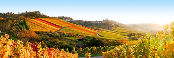 Image utilisée sous licence de Shutterstock.com / Provence