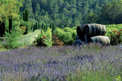 Vignobles et lavande  au Château de Berne à Flaysac. VisitVar.