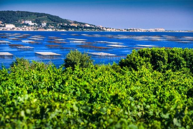 L'étang de Thau 800 exploitations assurent l'élevage des huîtres et des moules de Bouzigues. G. Deschamps. CRT Occitanie.