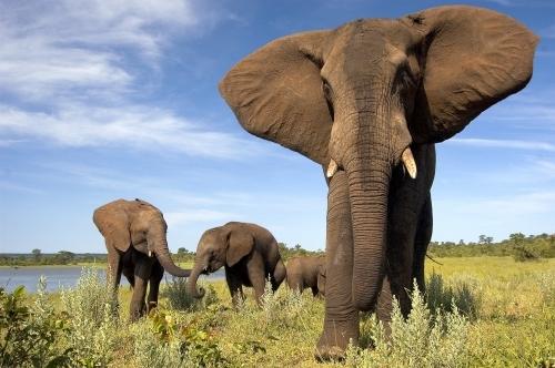 Le Zimbabwe est une très belle destination safari en Afrique Australe.DR