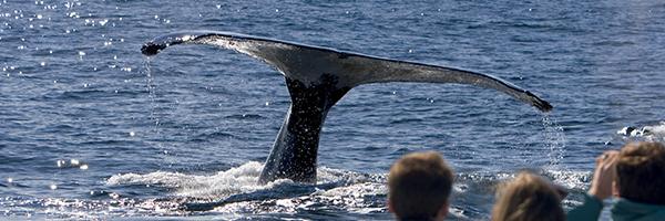 Baleines / © Shutterstock