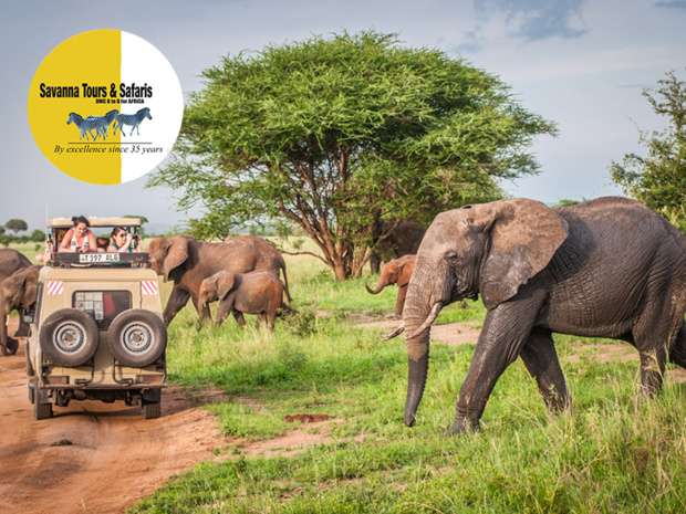 SAVANNA TOURS & SAFARIS, Réceptif Tanzanie