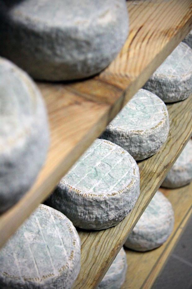 De chèvre ou de brebis, des fromages AOC. S.  Alessandri.