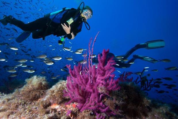 Passer un baptême ou brevet de plongée dans un des 60 centres de plongée de l'île et évoluer en profondeur dans des spots préservés à la découverte d'une faune et d'une flore exceptionnelles. © frantisek hojdysz_plongee