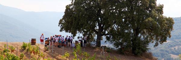 Dégustation privative au cœur d'un domaine viticole  / © CORSE INCENTIVE