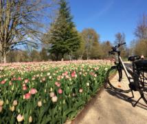 Cheverny Voyages produit intégralement ses séjours, avec ses propres vélos - DR : Cheverny Voyages