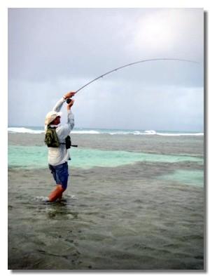 Guadeloupe : tourisme de pêche écotouristique