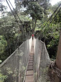 La forêt amazonienne entre ciel et terre - Photo DR