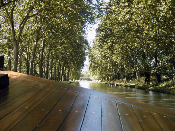 La maladie du chancre coloré conduit à l'abattage de milliers de platanes en bordure du Canal du Midi. Photo CE