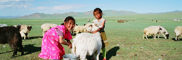 © DMD-Mongolie
