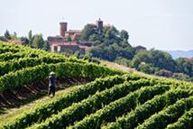 Vignoble du Beaujolais, autour d'Oingt (69), © P. Muradian/ Auvergne-Rhône-Alpes Tourisme
