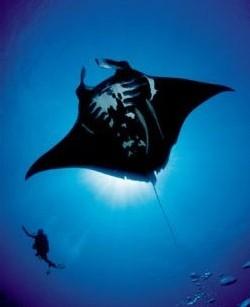 Nouméa : réouverture du Grand Aquarium pour son 50e anniversaire