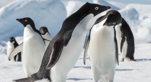 Bleu Infini entre chez Selectour avec ses expéditions polaires