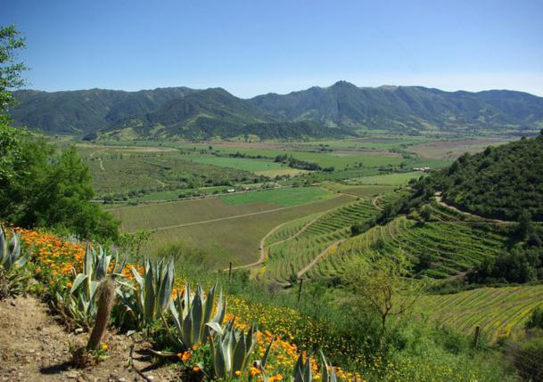 En tout, la jauge monte à 150 000 hectares de vignes, dont près des trois quarts plantées en cépages rouges. Ici, pas de petits producteurs : chaque exploitation compte des centaines, voire des milliers d'hectares - JFR