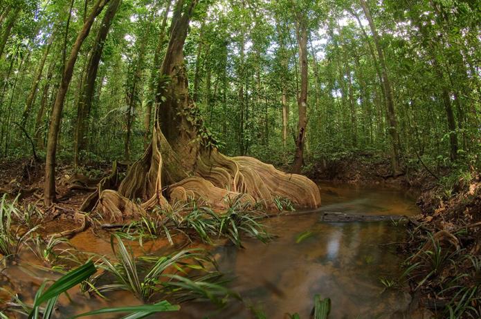 © CTG-Shutterstock /Moutouchi rivière
