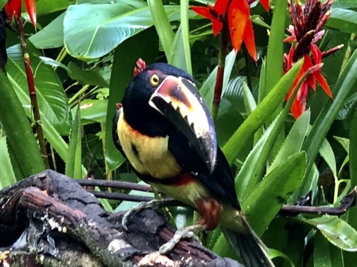 Les forêts occupent désormais 52 % du territoire et on y recense 850 espèces d'oiseaux / crédit JDL