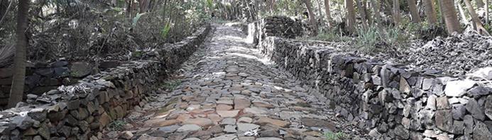 AGAMIS / Allée pavée construite par les bagnards et récemment restaurée (île Saint-Joseph)