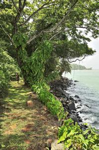 Sentier de randonné bord de mer Île Royale