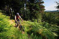 The Phoenix Trail, Mabie Forest - DR VisitScotland - Paul Tomkins