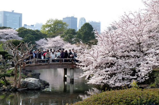 A l'approche du printemps, une reprise de l'activité touristique vers le Japon se fait sentir parmi les professionnels du tourisme - DR