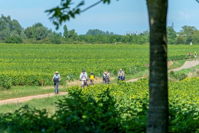 Vélos Vignobles - Photo Alain Doiré, Bourgogne-Franche-Comté Tourisme
