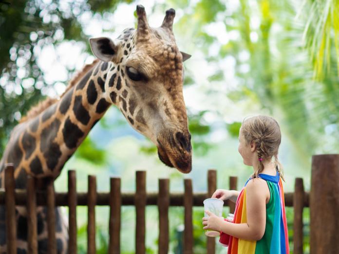 """""""Ce qui est certain est que le mot """"zoo"""" est entaché aujourd'hui d'une image vieillotte et représente un concept repoussoir lié à une captivité coupable, qui ferait des fortunes sur l'exploitation de pauvres animaux sauvages. C'est un cliché qui a la vie dure, et qui est de mon point de vue une injure pour ceux qui font bien leur travail."""" - Depositphotos.com FamVeldman"""