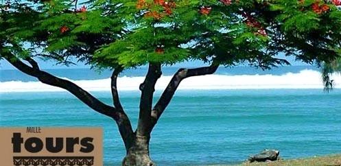 Mille Tours spécialiste de l'Ile de la Réunion depuis 1992 !
